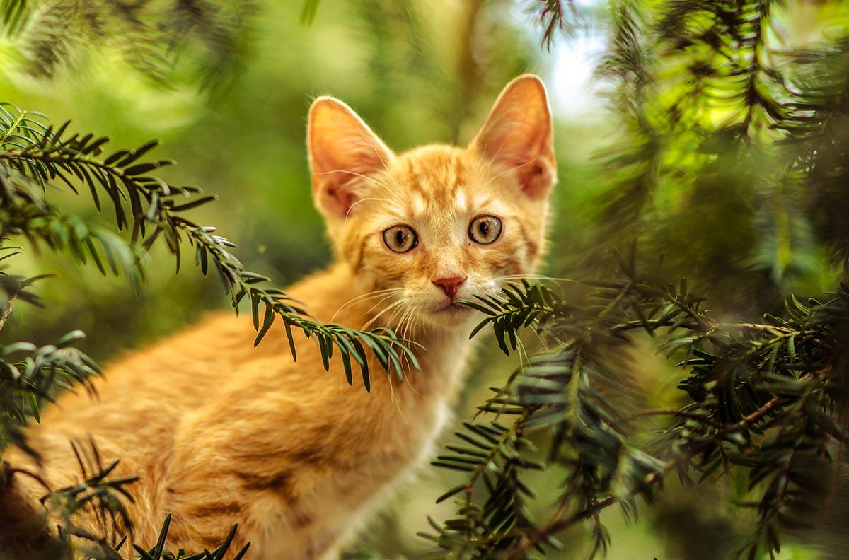 Obrázok pre kategóriu Kočky